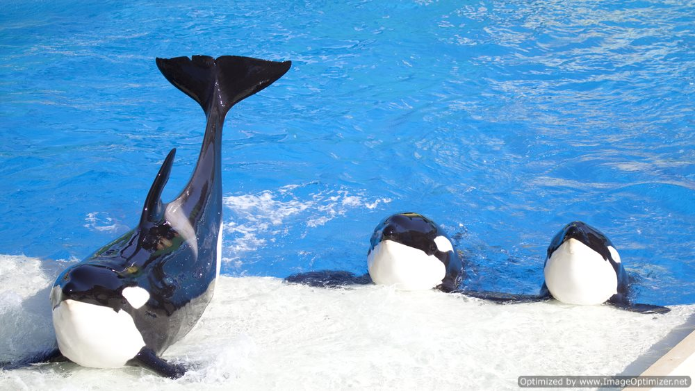 PETA Playing Hardball: Environmental Advocacy Group Purchases a Stake in SeaWorld